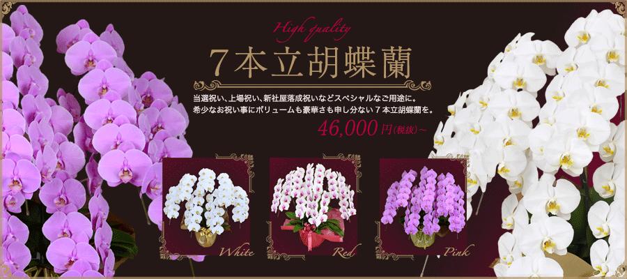 7本立胡蝶蘭